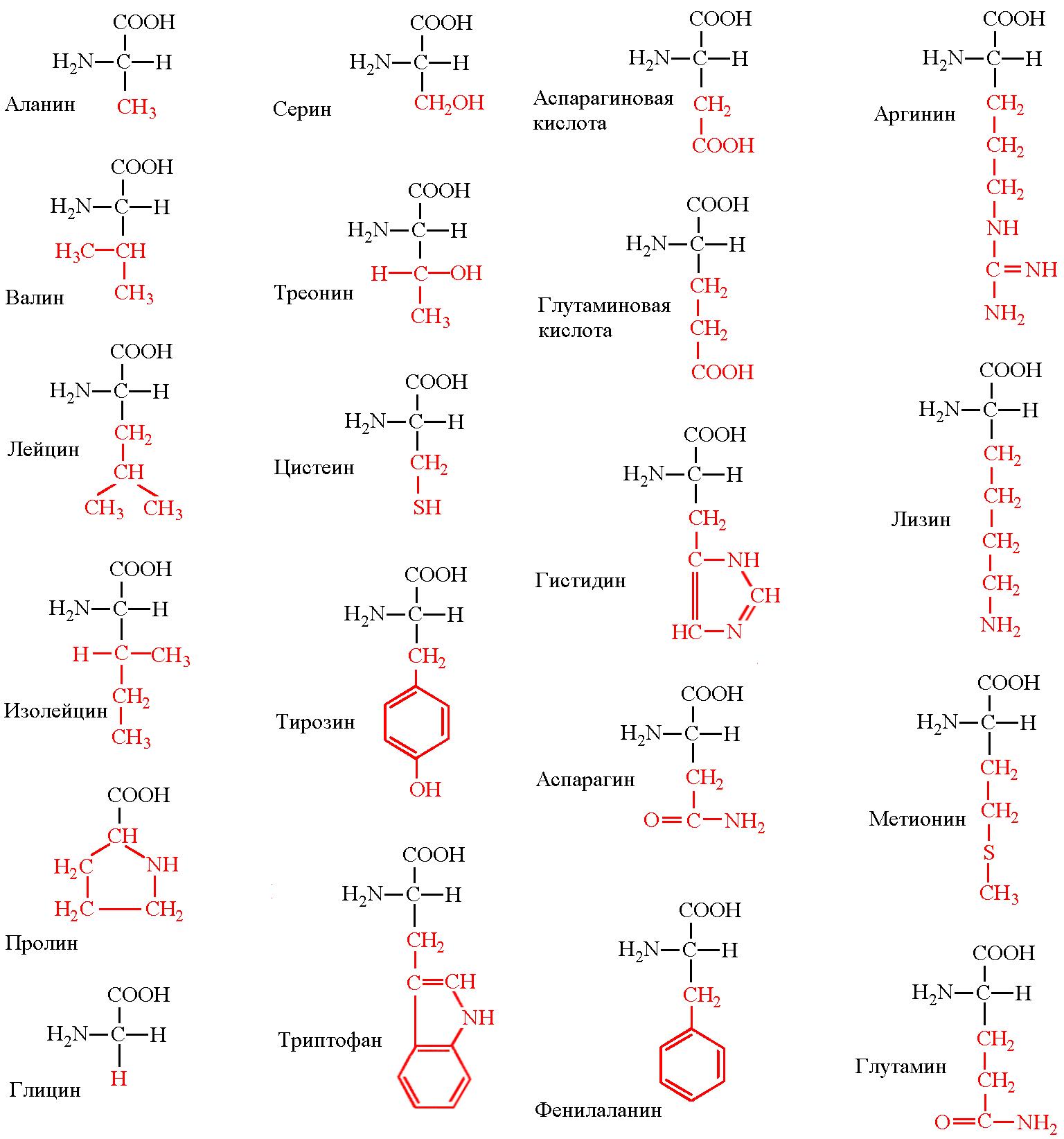 зачем нужны аминокислоты
